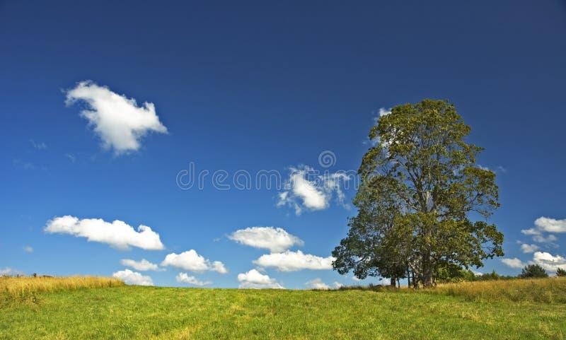 Fondo del cielo azul y del árbol profundos fotografía de archivo