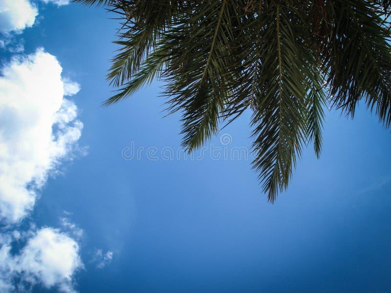 Fondo del cielo blu con le nuvole ed i rami delle palme Lanzarote, Canarias spain immagini stock libere da diritti