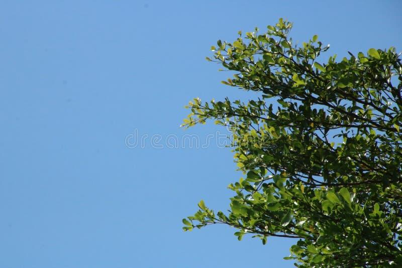 Fondo del cielo e ramo dell'albero fotografie stock