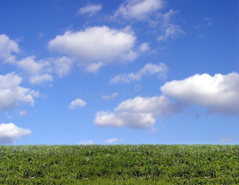 Fondo del cielo y de la hierba fotografía de archivo libre de regalías