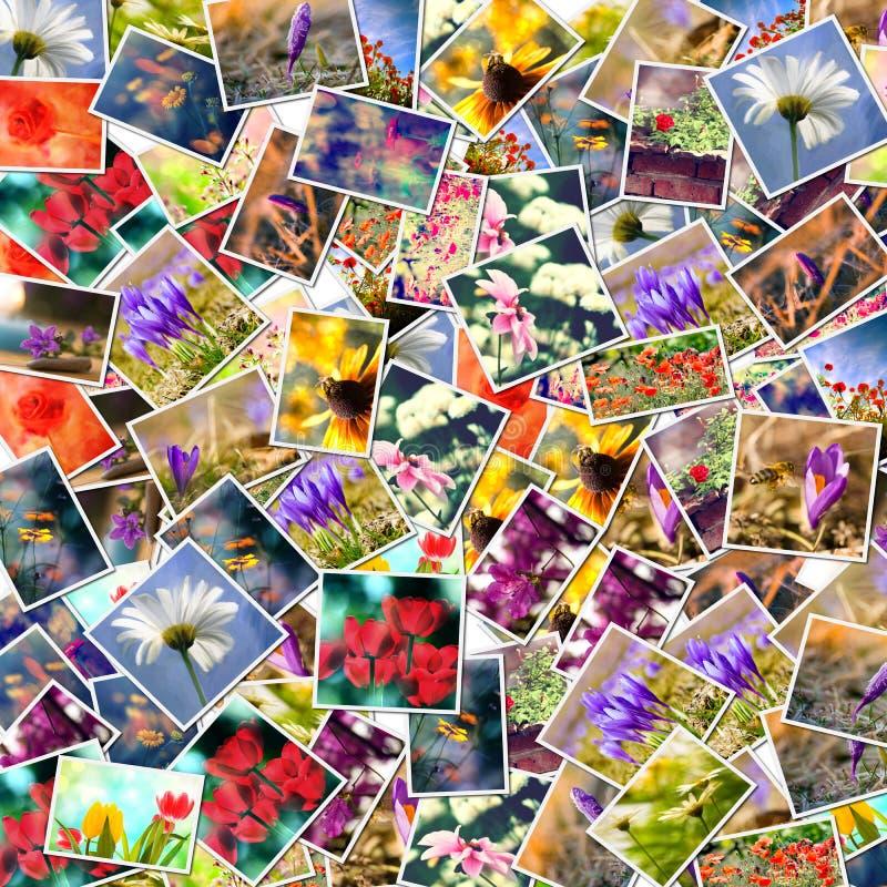 Fondo del collage del fiore fotografie stock