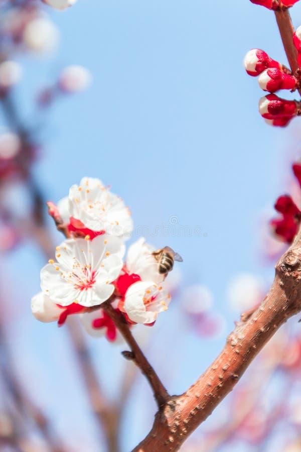 Fondo del confine della sorgente con il fiore rosa Sottragga la priorit? bassa floreale immagine stock