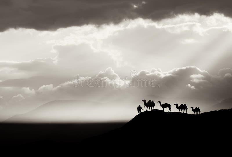 Fondo del deserto di Bw fotografia stock libera da diritti