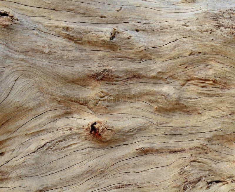 Fondo del Driftwood fotos de archivo libres de regalías