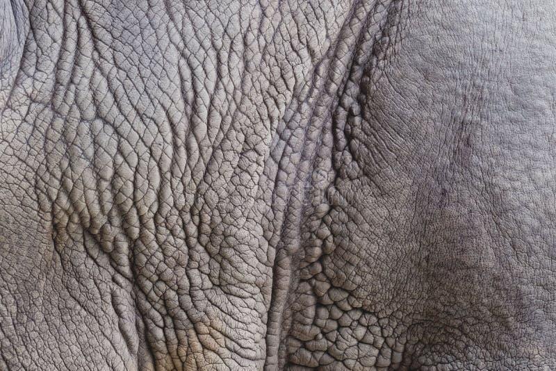 Fondo del extracto de la textura de la piel del elefante fotografía de archivo libre de regalías
