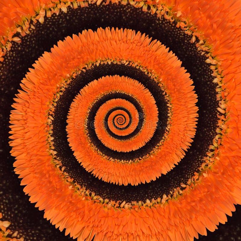 Fondo del extracto del espiral del infinito de la flor del Gerbera imagenes de archivo