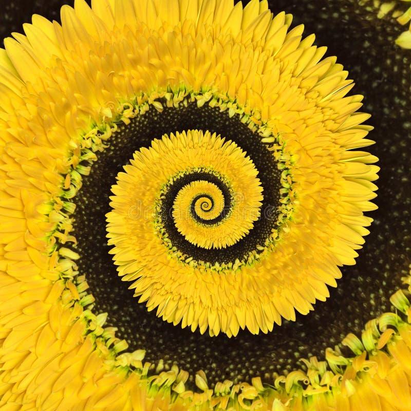 Fondo del extracto del espiral del infinito de la flor del Gerbera fotografía de archivo