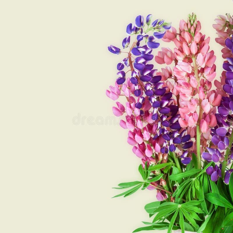 Fondo del fiore del lupinus lupino fotografie stock libere da diritti