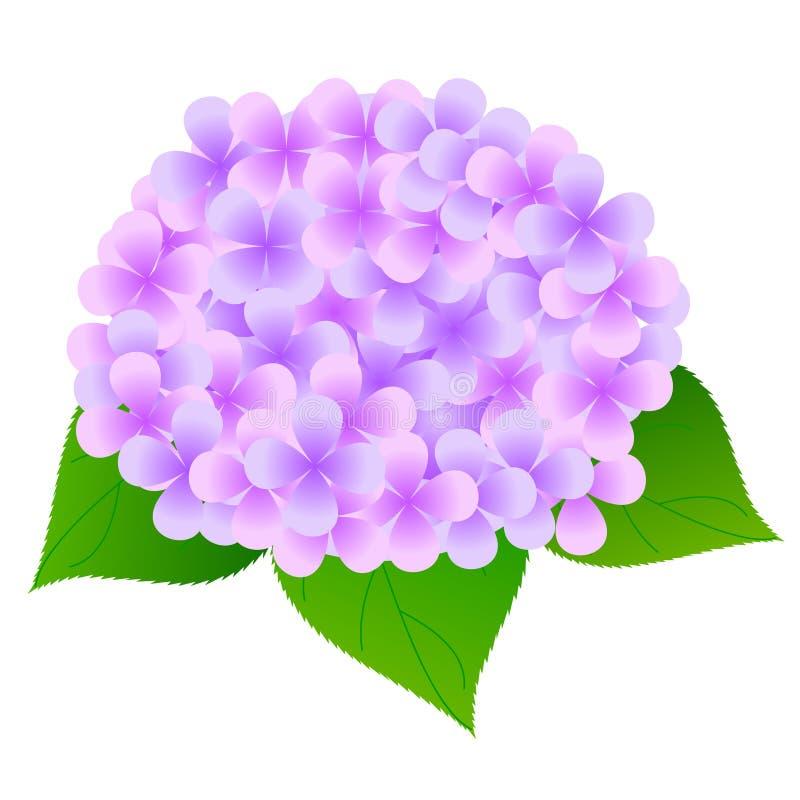 Fondo del fiore dell'ortensia royalty illustrazione gratis