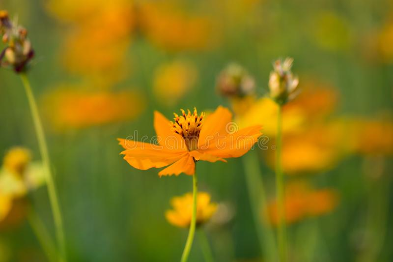 Fondo del fiore ed essenziale immagine stock