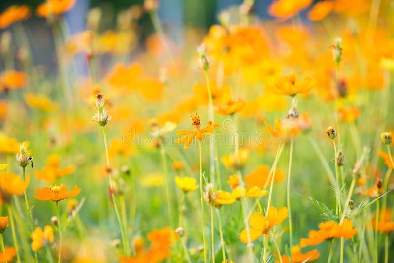 Fondo del fiore ed essenziale fotografie stock libere da diritti