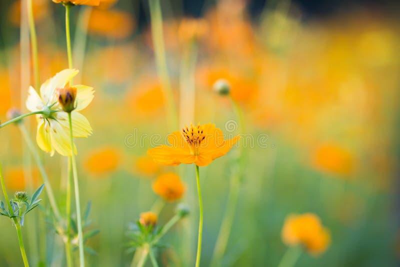 Fondo del fiore ed essenziale immagini stock libere da diritti