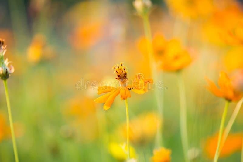 Fondo del fiore ed essenziale fotografia stock libera da diritti