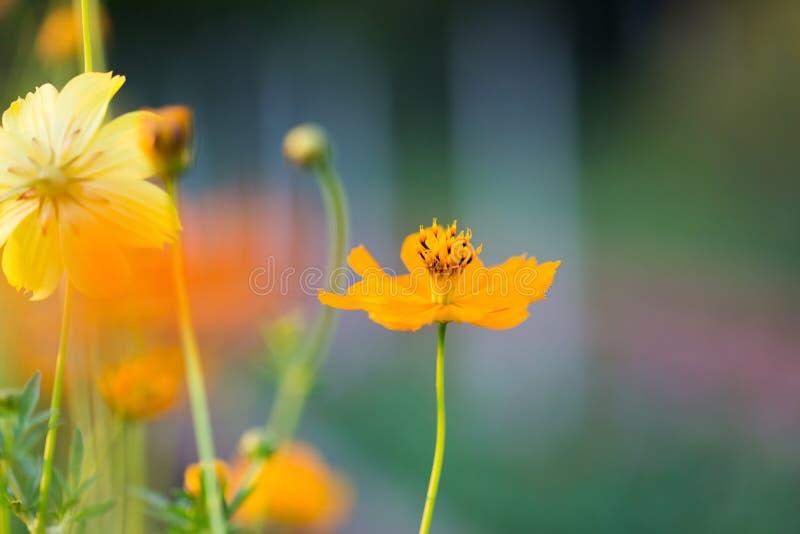 Fondo del fiore ed essenziale fotografie stock