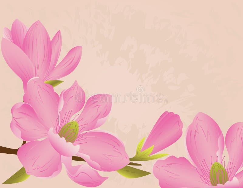 Fondo del flor de la magnolia stock de ilustración
