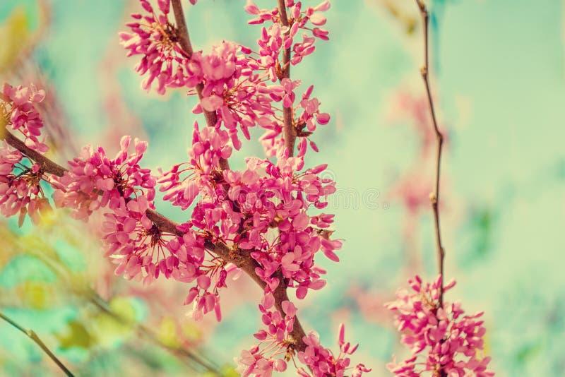 Fondo del flor de la primavera Árbol floreciente sobre backgroun de la naturaleza fotos de archivo libres de regalías