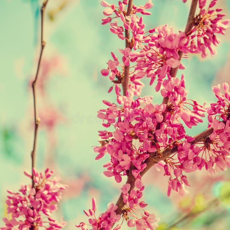 Fondo del flor de la primavera Árbol floreciente sobre backgroun de la naturaleza foto de archivo