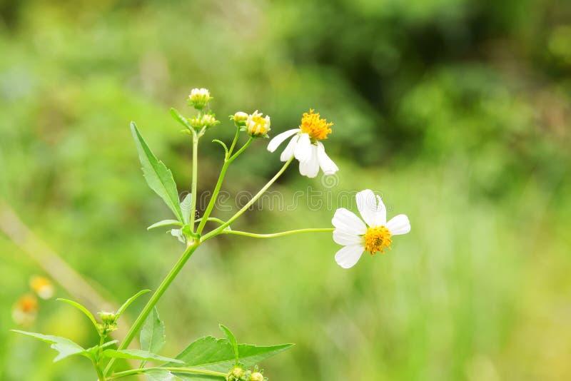 Fondo del flor de la primavera - frontera floral de hojas verdes foto de archivo