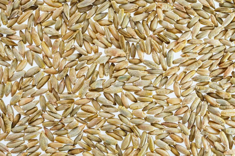 Fondo del grano del trigo foto de archivo