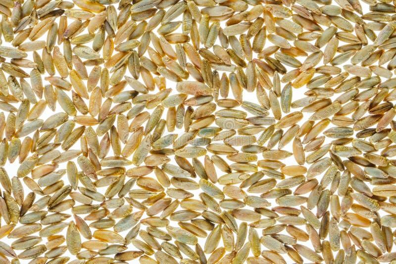 Fondo del grano del trigo imagen de archivo libre de regalías