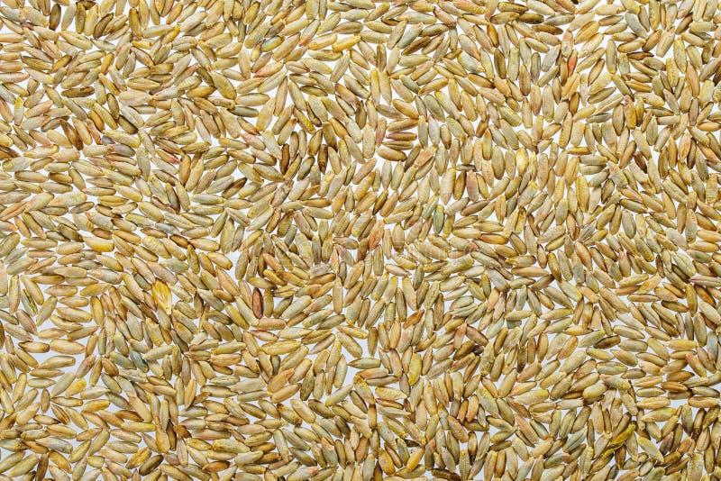 Fondo del grano del trigo imágenes de archivo libres de regalías