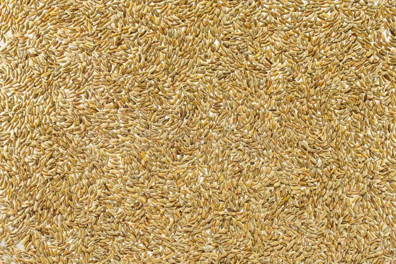 Fondo del grano del trigo foto de archivo libre de regalías