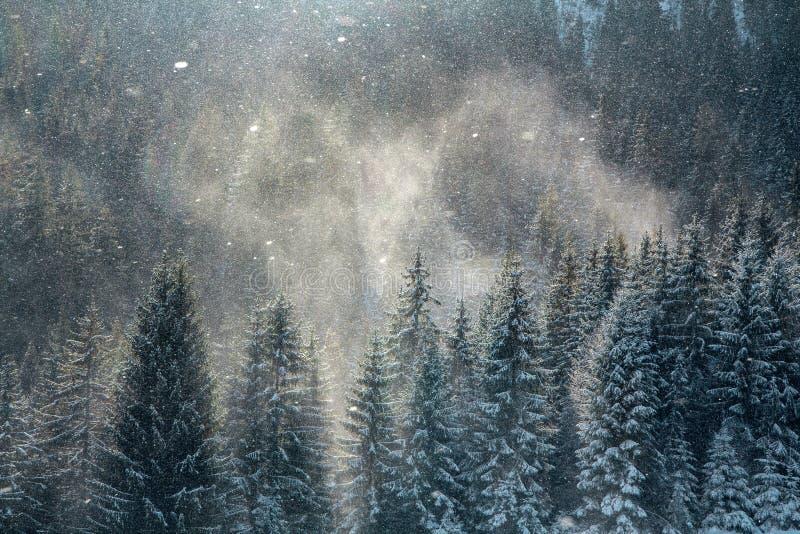 Fondo del invierno, ventisca de la nieve sobre los tops del bosque del pino fotos de archivo