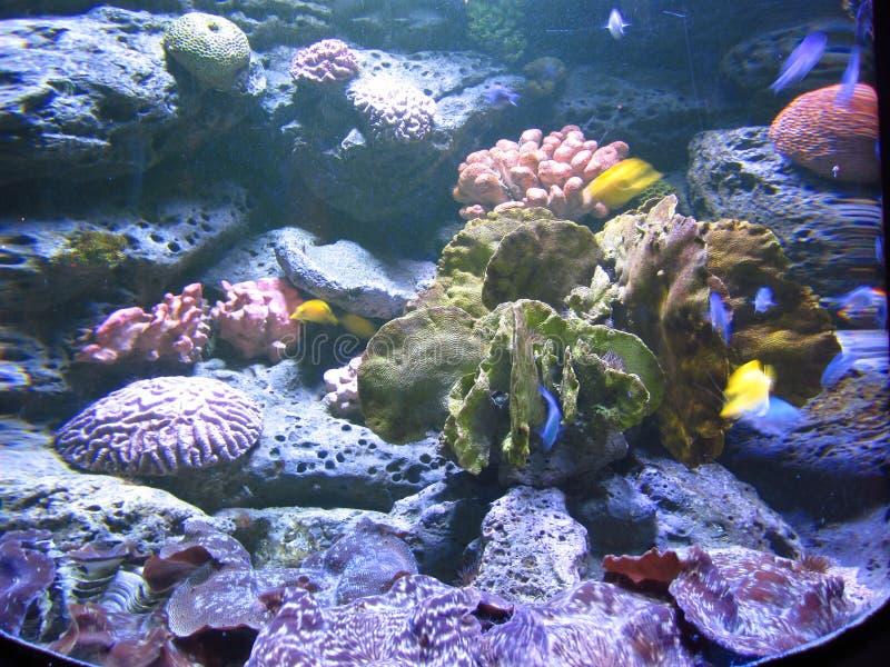Fondo del mar coralino imagen de archivo libre de regalías