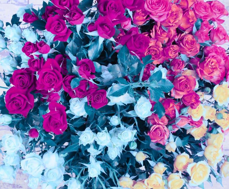 Fondo del mazzo del fiore Magenta rosa e rose blu immagini stock libere da diritti