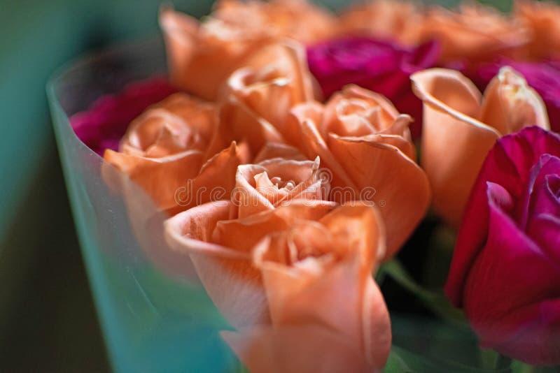 Fondo del melocotón y de rosas carmesís Rosas coralinas hermosas, cierre del ramo de las flores para arriba Ramo de carmesí y de  foto de archivo
