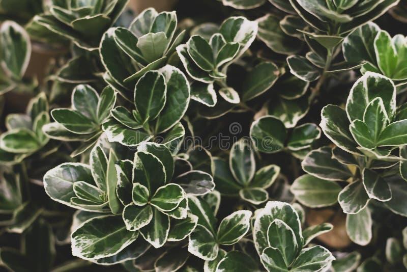 Fondo del modello delle foglie verdi, sfondo naturale e carta da parati fotografia stock