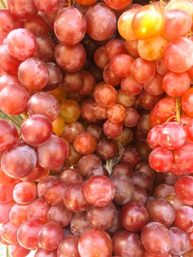 Fondo del modello di struttura della frutta dell'uva fotografia stock