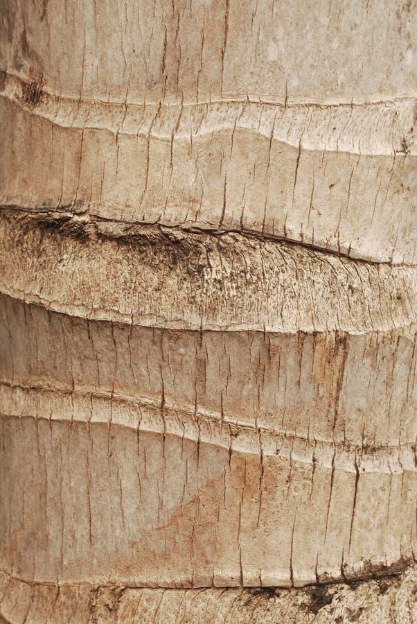 Fondo del modelo del árbol de coco fotos de archivo libres de regalías