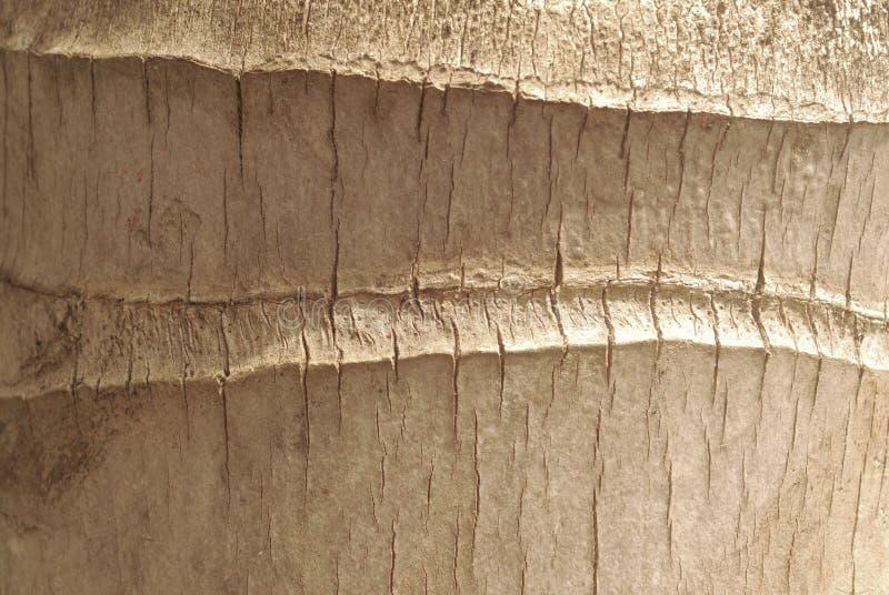 Fondo del modelo del árbol de coco imagen de archivo libre de regalías