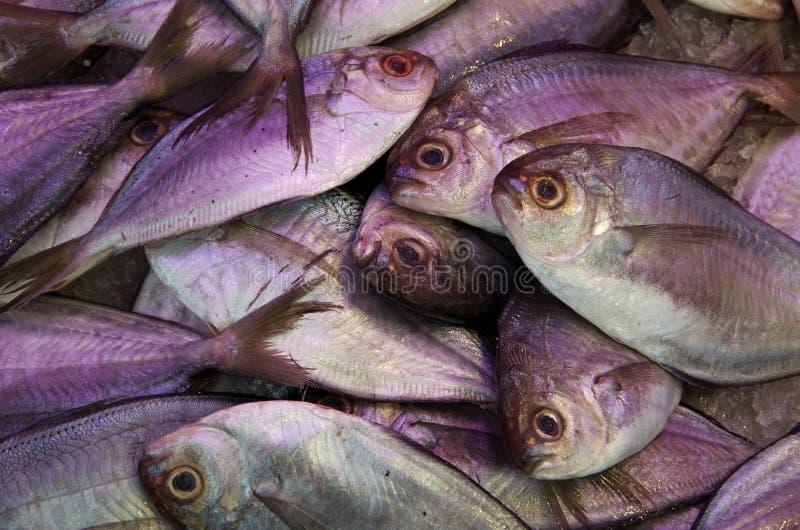 Fondo del mucchio del pesce fresco immagini stock