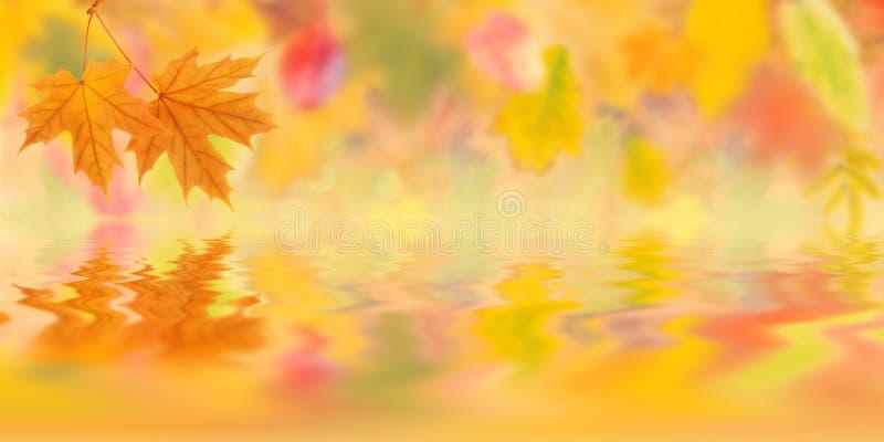 Fondo 005 del otoño foto de archivo