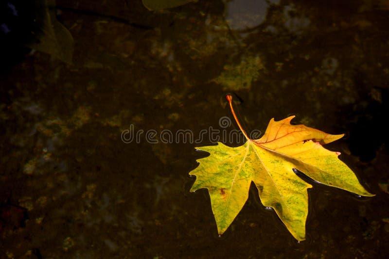 Download Fondo del otoño foto de archivo. Imagen de arce, charca - 7284782