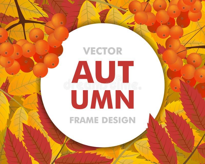 Fondo del otoño con la rama del serbal, de bayas y de hojas, con ilustración del vector