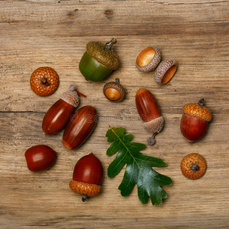 Fondo del otoño con las bellotas imagen de archivo libre de regalías