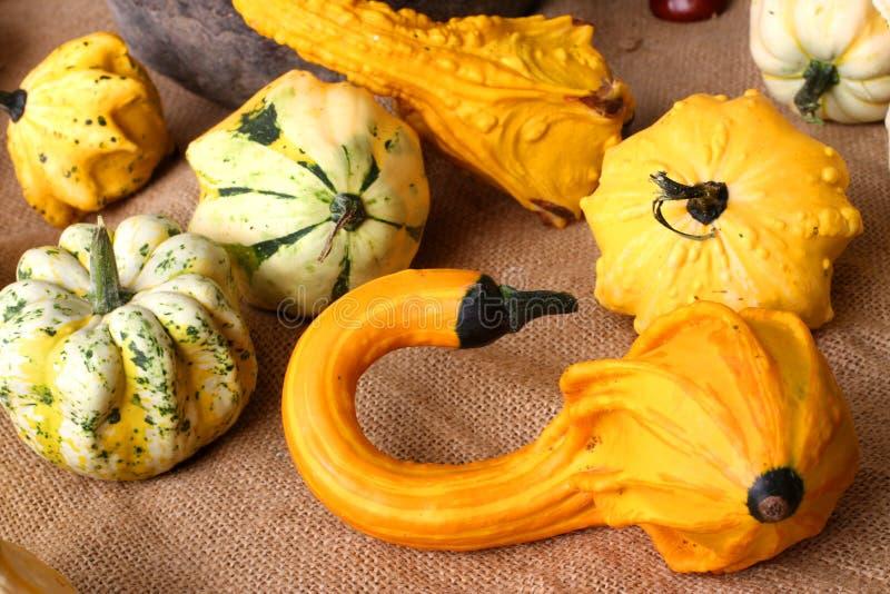Fondo del otoño con las calabazas decorativas coloridas foto de archivo libre de regalías