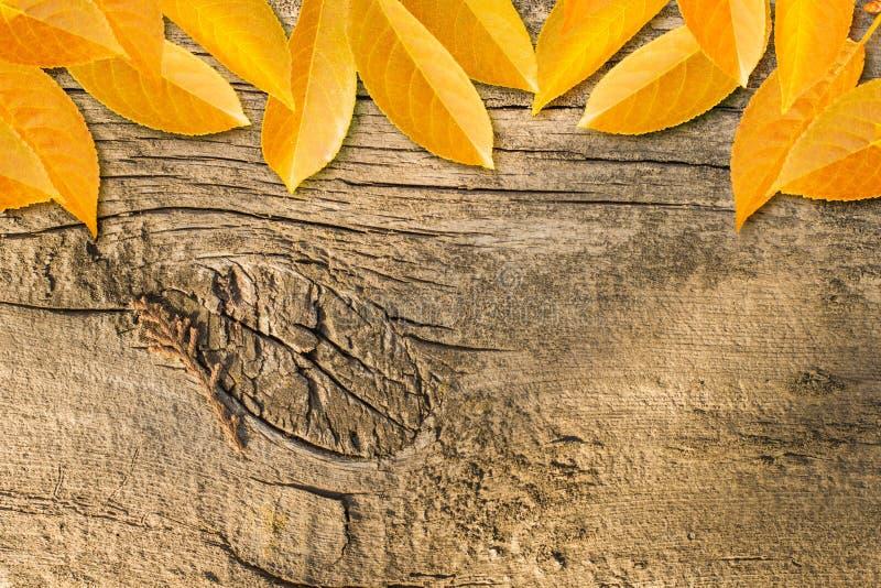 Fondo del otoño con las hojas coloreadas imagen de archivo libre de regalías