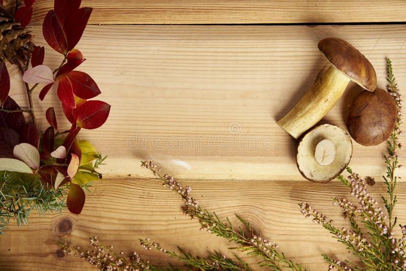 Fondo del otoño con las hojas y los conos de las setas en una tabla de madera vieja fotografía de archivo libre de regalías
