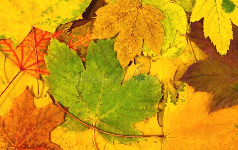 Fondo del otoño de hojas coloridas foto de archivo libre de regalías