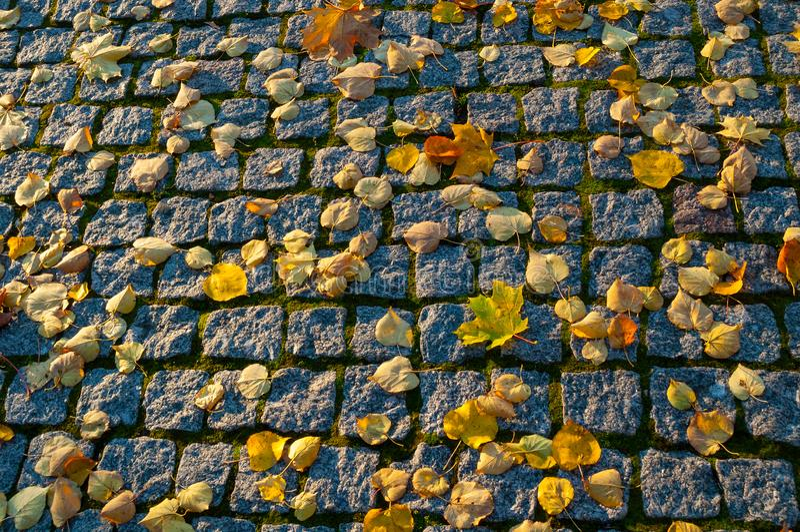 Fondo del otoño Hojas de otoño anaranjadas caidas en el pavimento de piedra texturizado fotografía de archivo libre de regalías