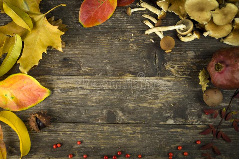 Fondo del otoño; hojas, setas y bayas imagenes de archivo