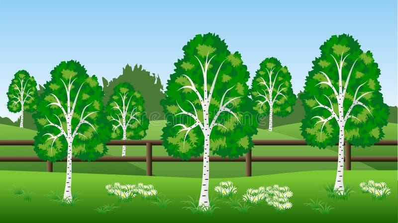 Fondo del paesaggio di estate con gli alberi di betulla, colline, erba e illustrazione vettoriale