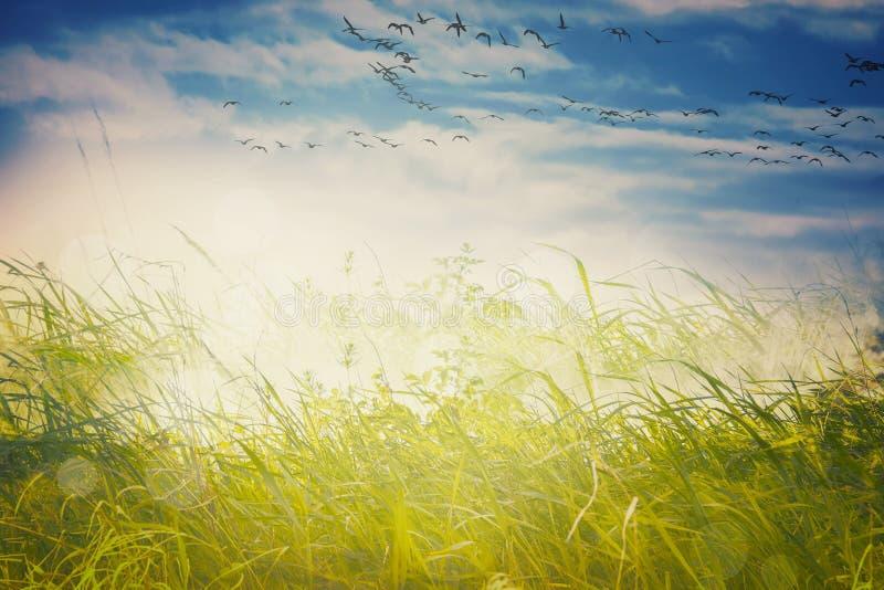 Fondo del paisaje con los pájaros fotografía de archivo