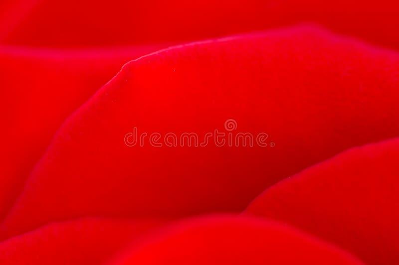 Fondo del pedal de Rose fotos de archivo