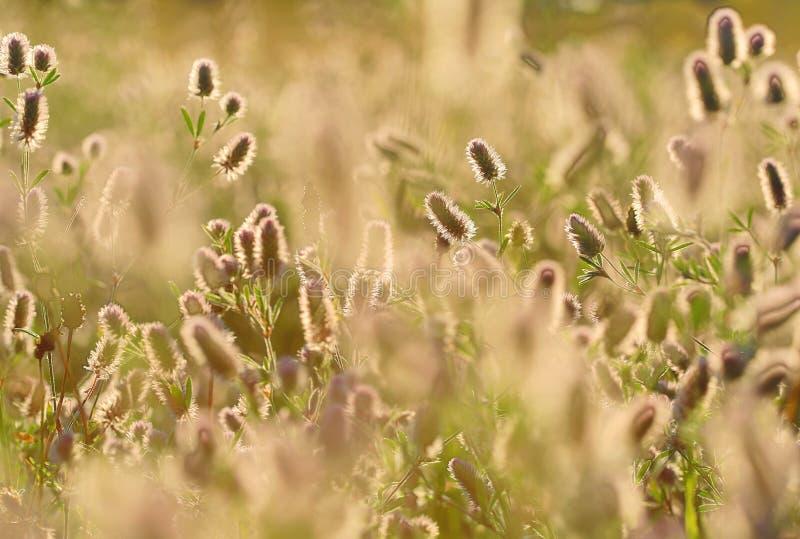 Fondo del prato del fiore di estate fotografia stock libera da diritti