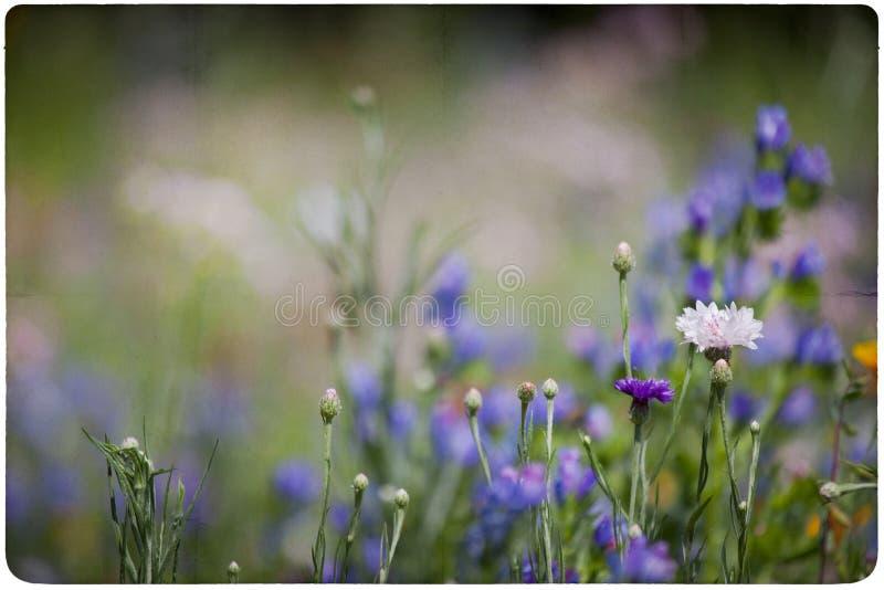 Fondo del prato del Wildflower immagine stock libera da diritti